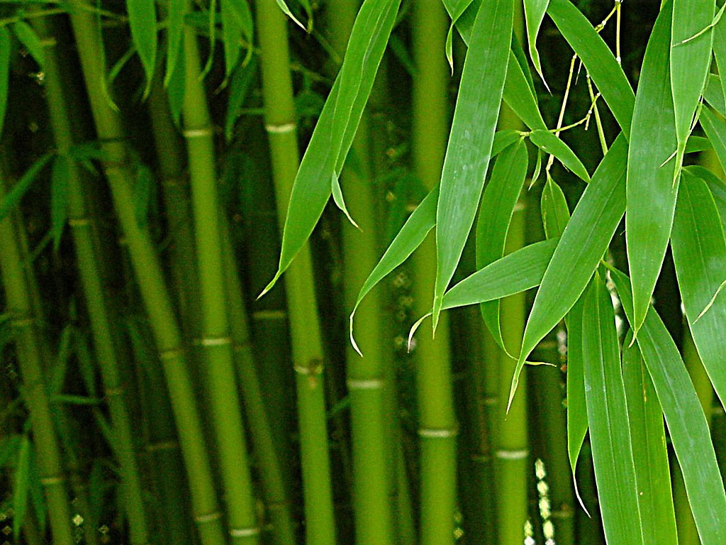 Как стирать бамбуковые подушки правильно